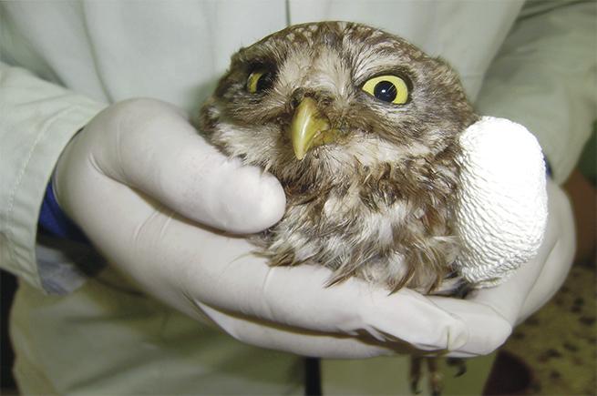 χειρισμό ένα μεγάλο πουλί
